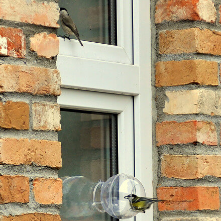 Ptak korzystający z karmnika transparentnego przymocowanego na szybie
