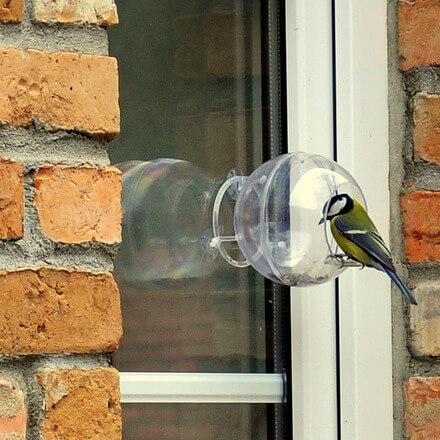 Ptak w transparentnym karmniku MAŁY ORNITOLOG